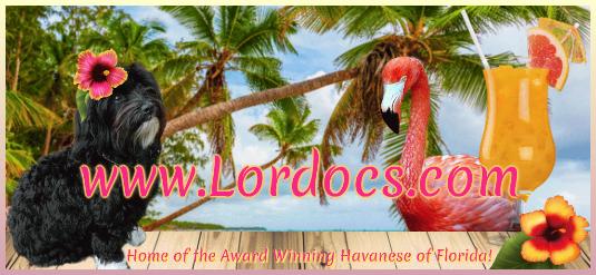 Lordocs_2016