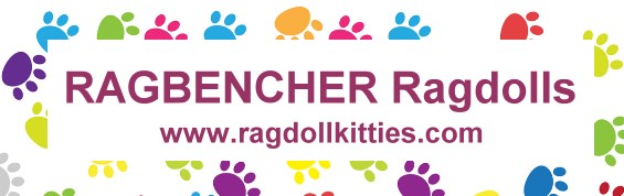 RagBencher Ragdolls